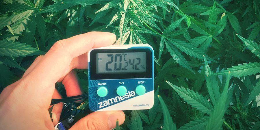 système de culture de cannabis