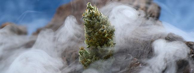 Cannabis sacré