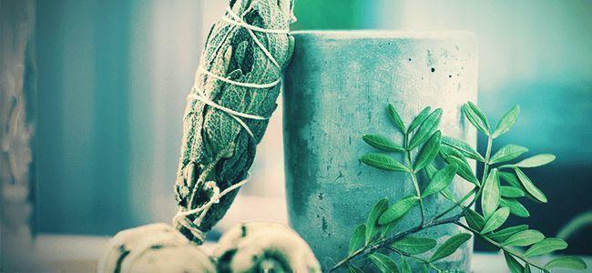 Comment Consommer De La Salvia Divinorum ?