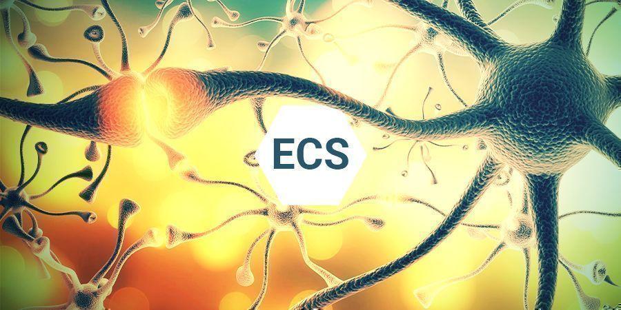 Qu'est-ce Que Le Système Endocannabinoïde ?