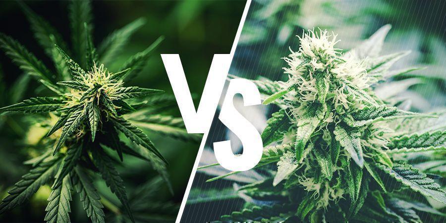 Quelle Est La Différence Entre Chanvre Et Cannabis ?