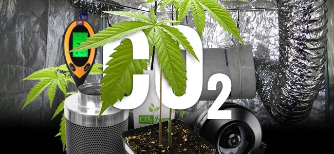 CO₂ Et Cannabis