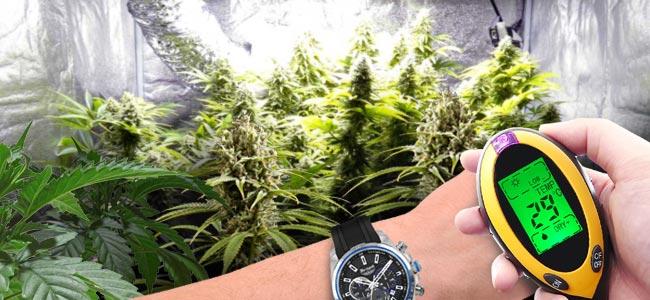 Effets Positifs Du CO₂ Sur Les Plants De Cannabis