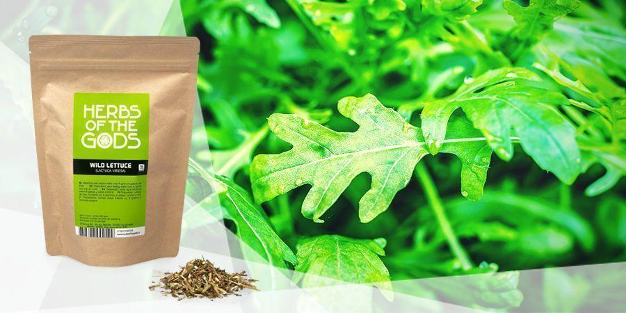 Laitue Sauvage  - Herbes À Vaporiser Pour La Bonne Humeur