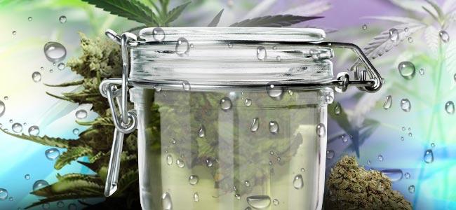 Water Curing Du Cannabis