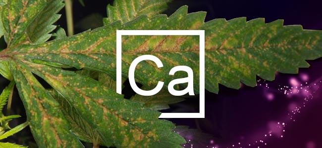 Carence En Calcium