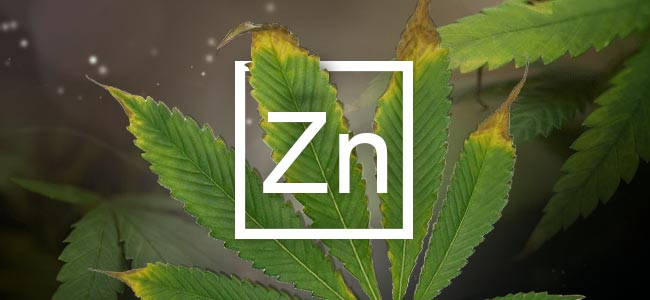 Carence En Zinc