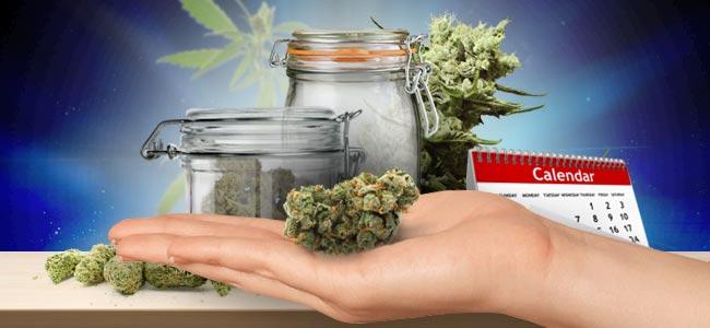 Conservation Du Cannabis