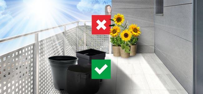 Pourquoi Devriez-vcultiver Votre Ganja Sur Votre Balcon: Avantages Et Désavantages