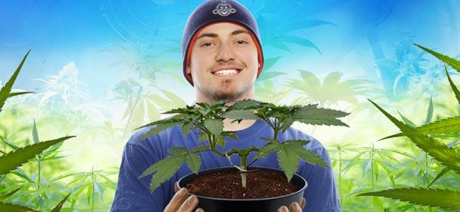 Main-lining Cannabis