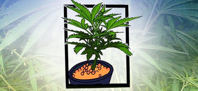 Mail-lining: Laissez Le Plant Choisi Pousser Jusqu'à Obtenir Six Internœuds