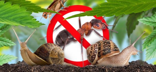 Insectes & Bestioles Pénibles