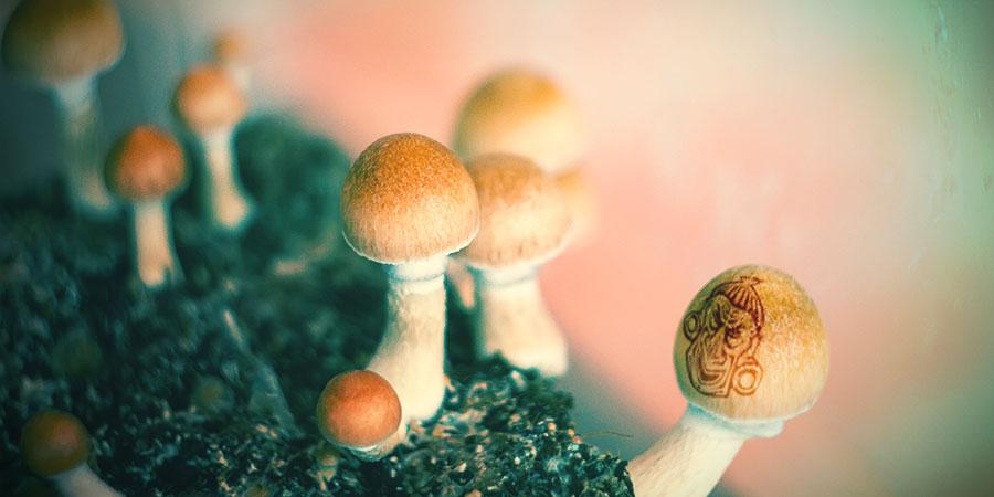 Les champignons maqigues