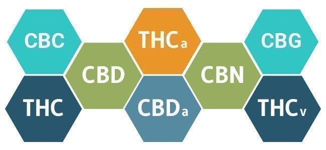 cannabinoïdes cannabis