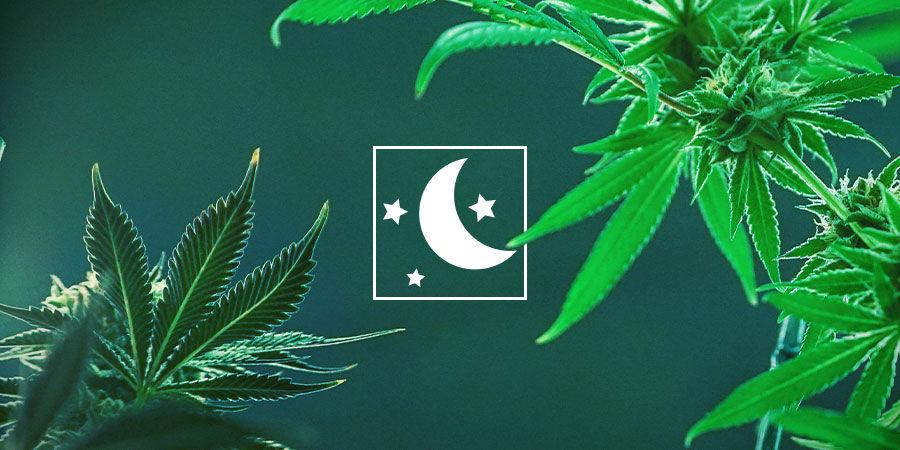Choisir Le Type De Cannabis Qui Convient Le Mieux À Vos Besoins