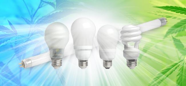 Lampes Fluorescentes Compactes (CFL)