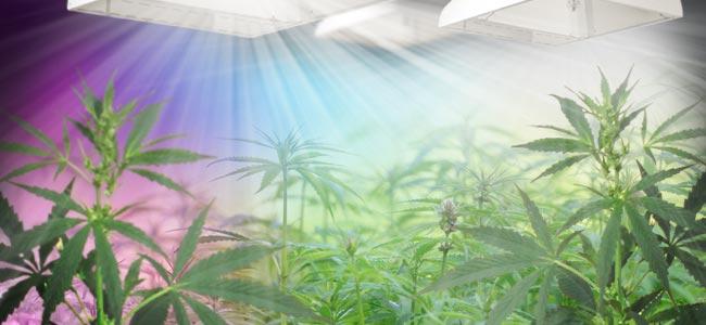 Le Spectre Lumineux Et Le Cannabis