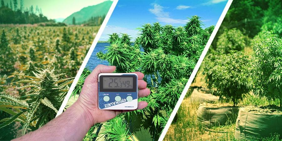 Cannabis Seedfinder : Climat