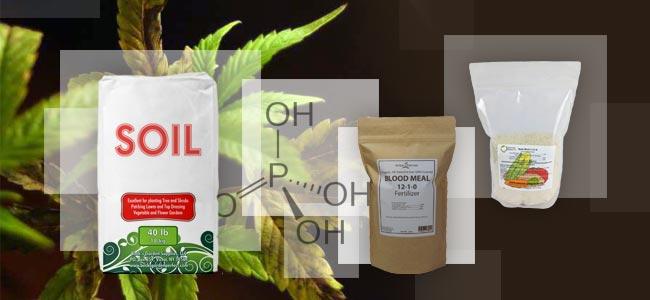 Carence En Phosphate: Que Faire ?