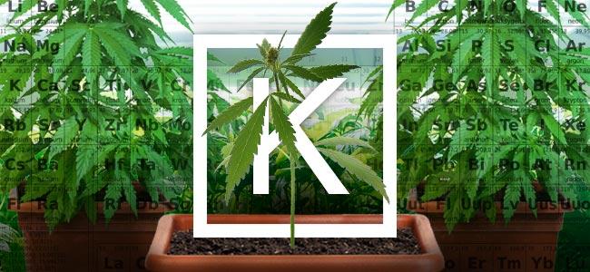 Le Potassium Et La Culture Du Cannabis