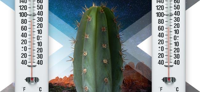 Les Cactus Jubilent Des Températures Supérieure