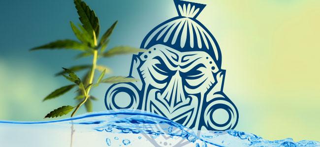 Les Plantes Végétatives Et De L'eau