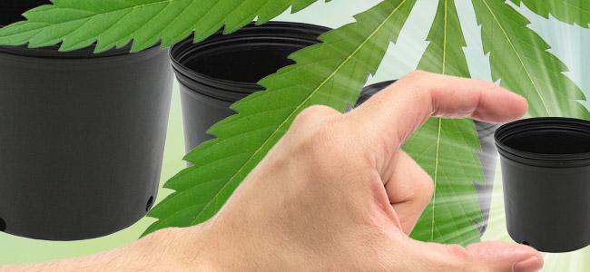 La Bonne Taille De Récipient Pour Vos Plants