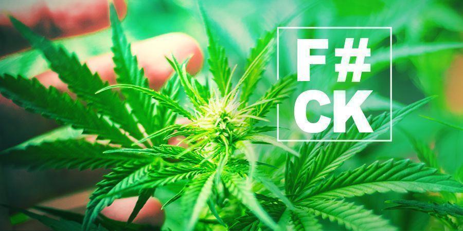 FIM du Cannabis : Tout Ce Que Vous Devez Savoir