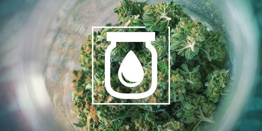 Water Curing Du Cannabis : C'est Quoi et Comment le Faire