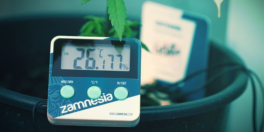 Cannabis : Conditions Optimales À La Photosynthèse