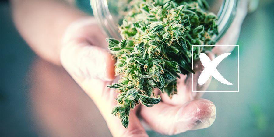Graines de Cannabis Régulières : les Inconvénients