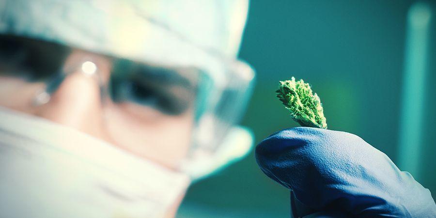 Comment Sont Faites Les Graines De Cannabis À Autofloraison ?