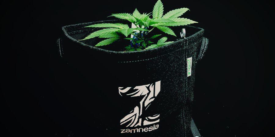 Pots En Tissu Géotextile Ou Smart Pots Cannabis
