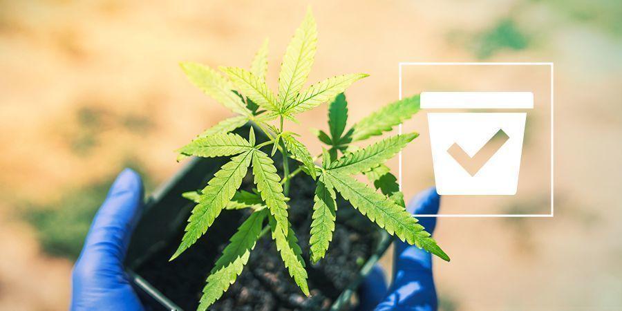 Bon Pot Pour Plants De Cannabis