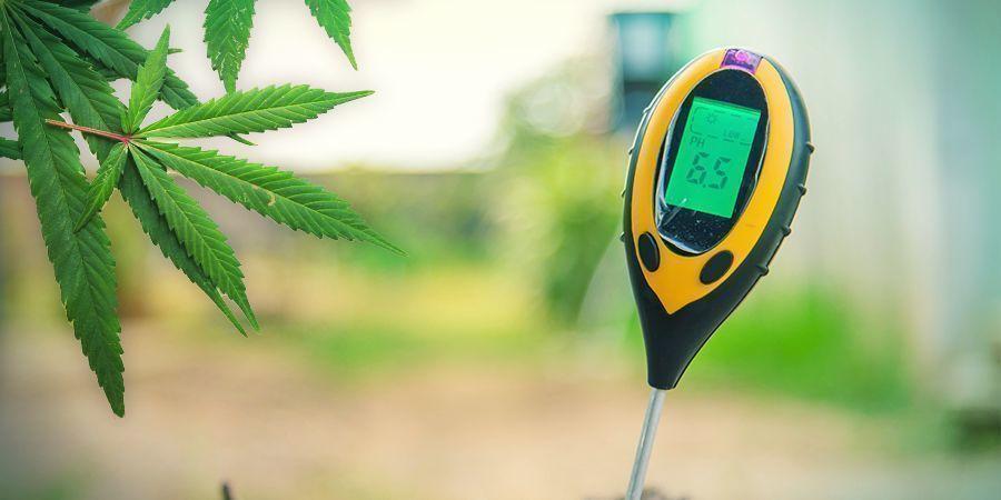 Cultiver Du Cannabis En Laine De Roche : Végétation