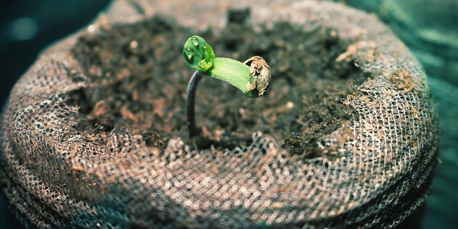 Germination Dans Le Milieu