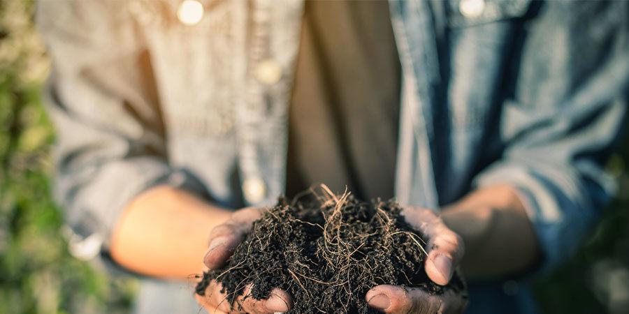 Utiliser les feuilles de cannabis comme compost