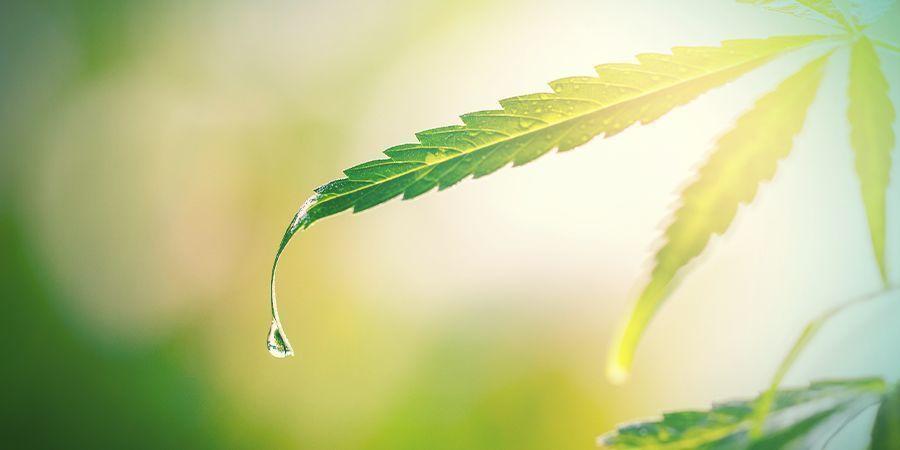 Rincez Les Plants