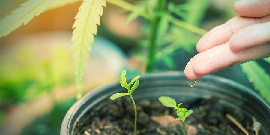 4 Watering Your Seedlings