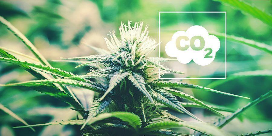 CO₂ Et Cannabis