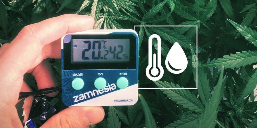 Humidité Dans L'espace De Culture De Cannabis