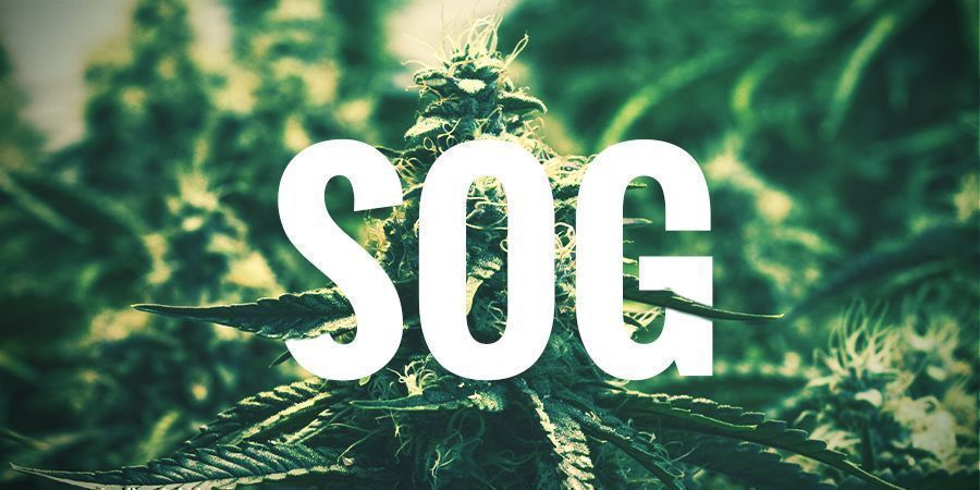 SOG—SEA OF GREEN