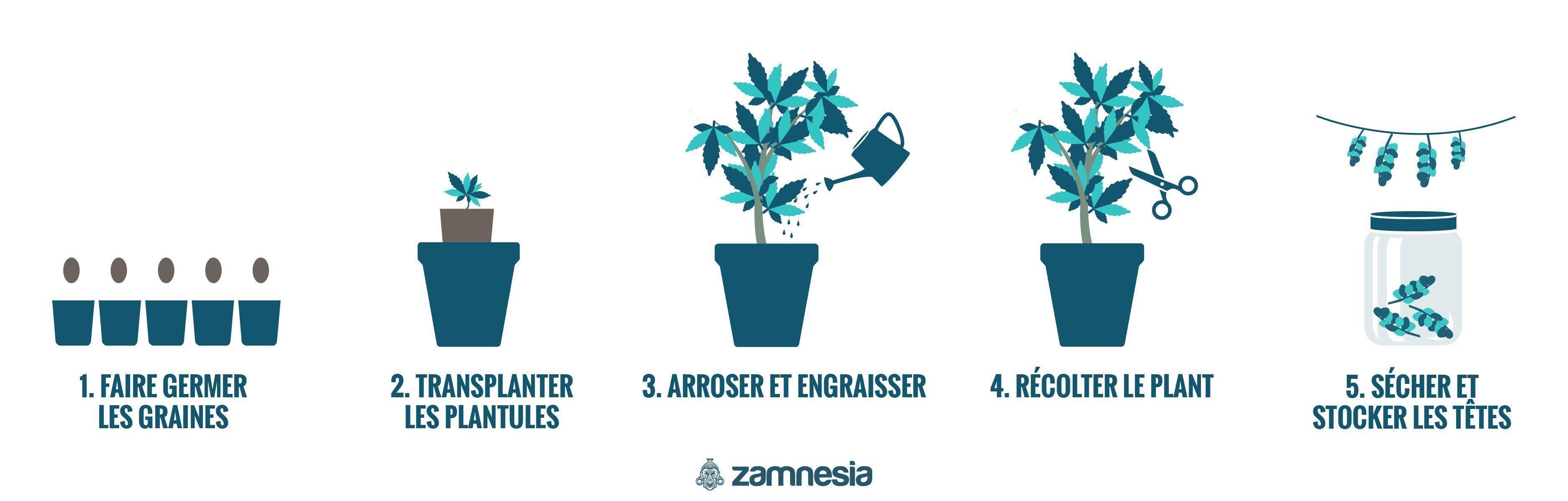 Comment Cultiver Du Cannabis En Extérieur
