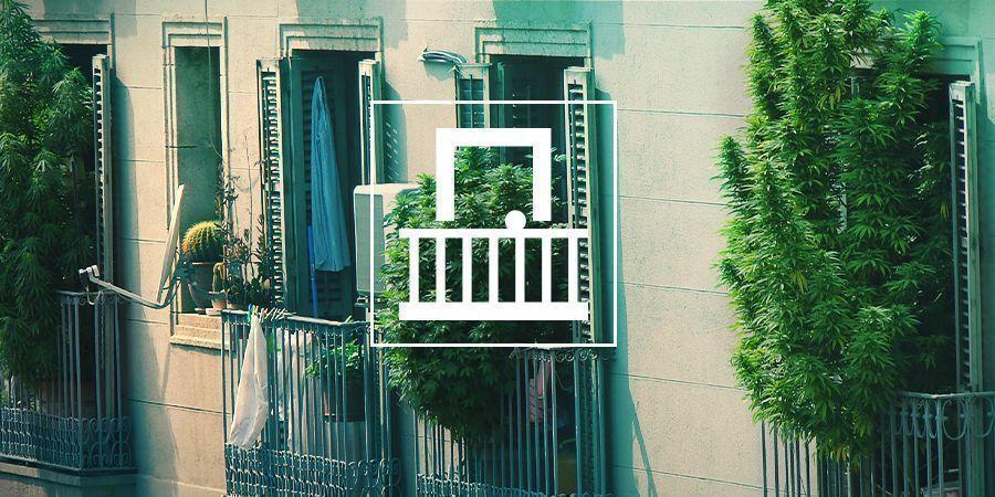 Pourquoi Devriez-VCultiver Votre Ganja Sur Votre Balcon Ou Terrasse