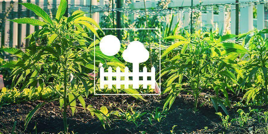 Culture En Jardin Et Arrière-Cour