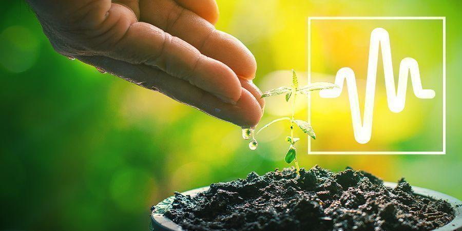 Entretien Des Plants
