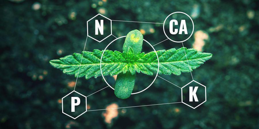 Calcium Dans Les Engrais Chimiques vs Bio