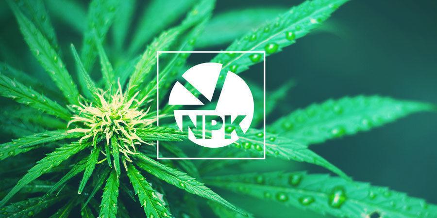 NPK : Le Meilleur Ratio En Nutriments En Culture Du Cannabis