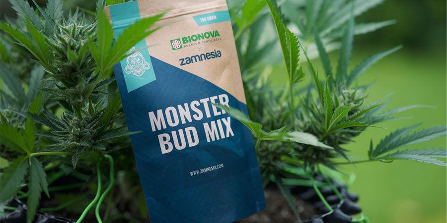 De Quels Nutriments Ont Besoin Les Plants De Cannabis À Autofloraison ?