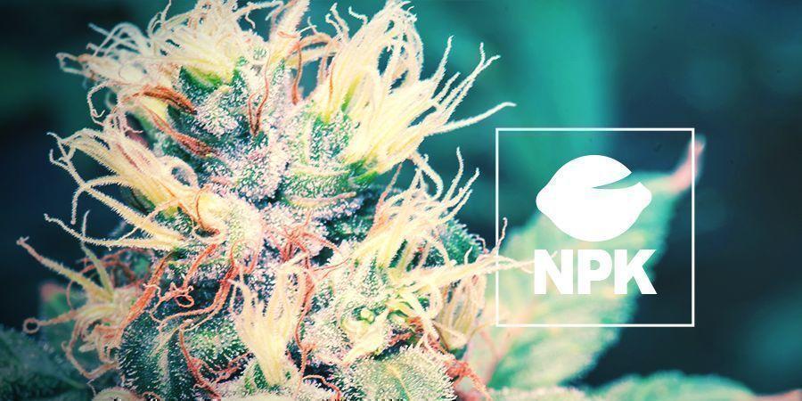 Pourquoi Les Plants De Cannabis Ont Besoin De Nutriments ?